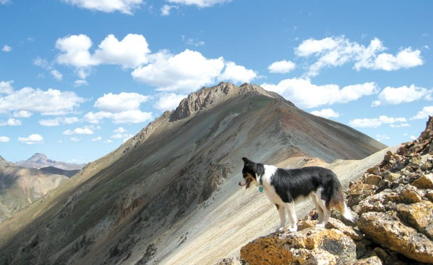 Canine Craggin': Take precautions if your pooch is going to summit. Photo: James Dziezynski