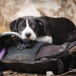 Boulder Canyon puppy