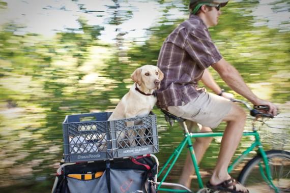 Zuke on the bike