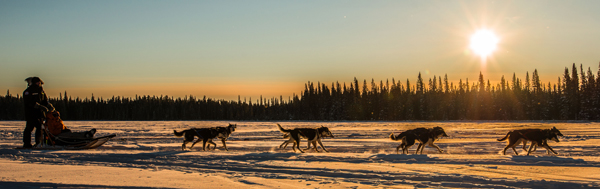Saskatchewan dog sled team © 2013 Bart Deferme