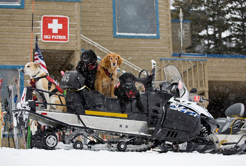 Keystone Resort avi dogs await their assignments. Photo by Aaron Bible.