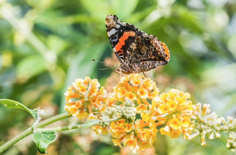 Start Your Xeric, Pollinator Friendly Garden